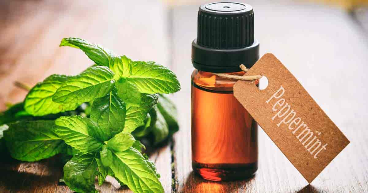 Benefits and Precautions of Peppermint Oil